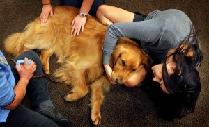 how-therapy-dogs-will-help-boston-bombing-victims_66462_600x450-300x183